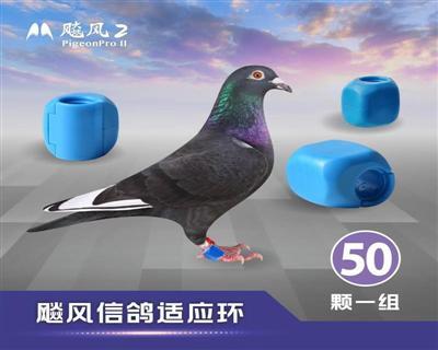 《预购》飚风信鸽适应环-《50颗装》