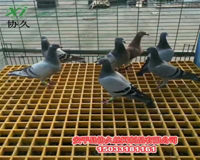 鸽舍塑料网格板