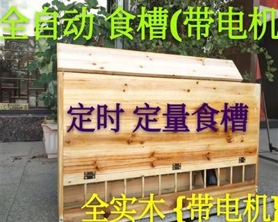 包邮鸽子自动喂食器远程控制定时定量自动喂料机 全实木自动食槽