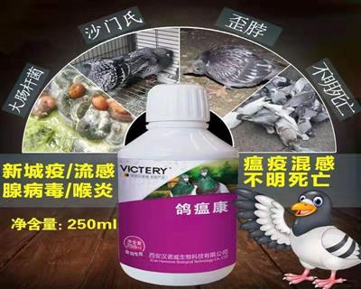 鸽瘟康:赛鸽各种瘟疫、病毒与细菌混合感染