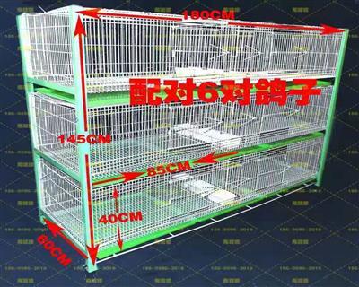 加宽种鸽配对笼 公棚幼鸽观察笼
