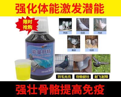 鸽赛尔能量肝精250毫升赛鸽信鸽用品鸽药鸽子药信鸽补体