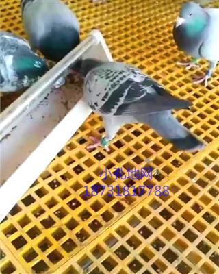 1.9厘米孔玻璃钢地网防鸟地网