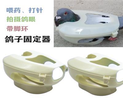 鸽子用品用具固定器信鸽固定器鸽子喂药器鸽具