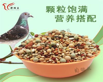 津羽王A级赛飞育鸽幼鸽清除饲料营养饲料 鸽粮 蛋黄饲料