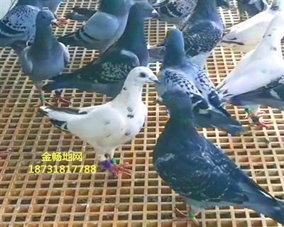 鸽舍用加密孔玻璃钢地网