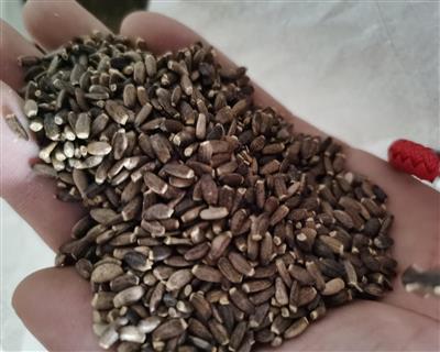 水飞蓟籽(保肝护肝)