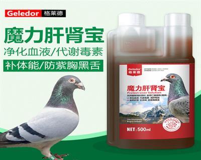 格莱德魔力肝肾宝鸽用肝精强肝补肾提高免疫
