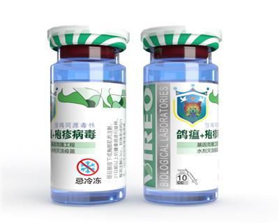 鸽疱疹病毒基因克隆工程水剂灭活疫苗