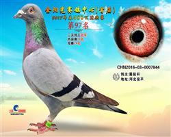 河南金阳光赛鸽中心2017年首届拍卖规则