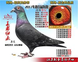 江苏翔圣赛鸽中心2017年海翔获奖鸽拍卖规则