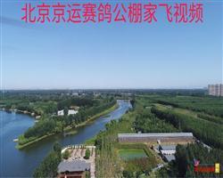 北京京运赛鸽养殖中心5月18日日常家飞
