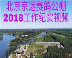 北京京运赛鸽公棚2018工作纪实视频