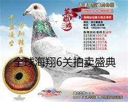 天津宇航公棚海翔(6关获奖鸽)拍卖照片