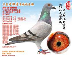宁夏开拓者赛鸽俱乐部2018年四关鸽王1-160名欣赏