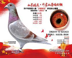 胜道·沂蒙山2019年获奖鸽照片鉴赏