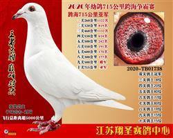 江苏翔圣:幼鸽跨海715公里获奖鸽拍卖公告